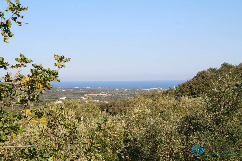 Mare e Ulivi da Villa Luis